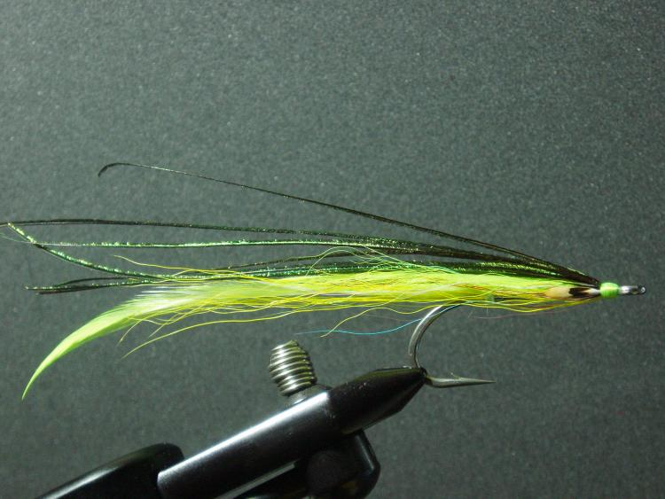 Flatwing, yellow/chartreuse
