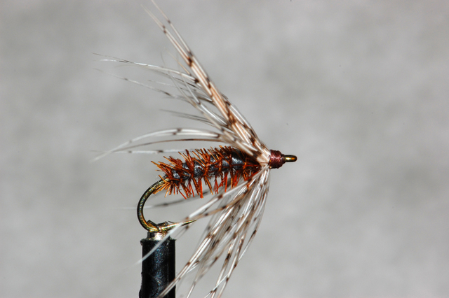 Bristle Back Soft Hackle