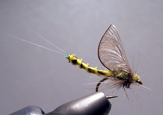 Biot Extended Body Mayfly