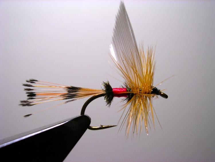 Royal Coachman Quill Wing